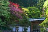 延暦寺 春爛漫の浄土院