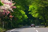 比叡山 八重桜とオープンカー