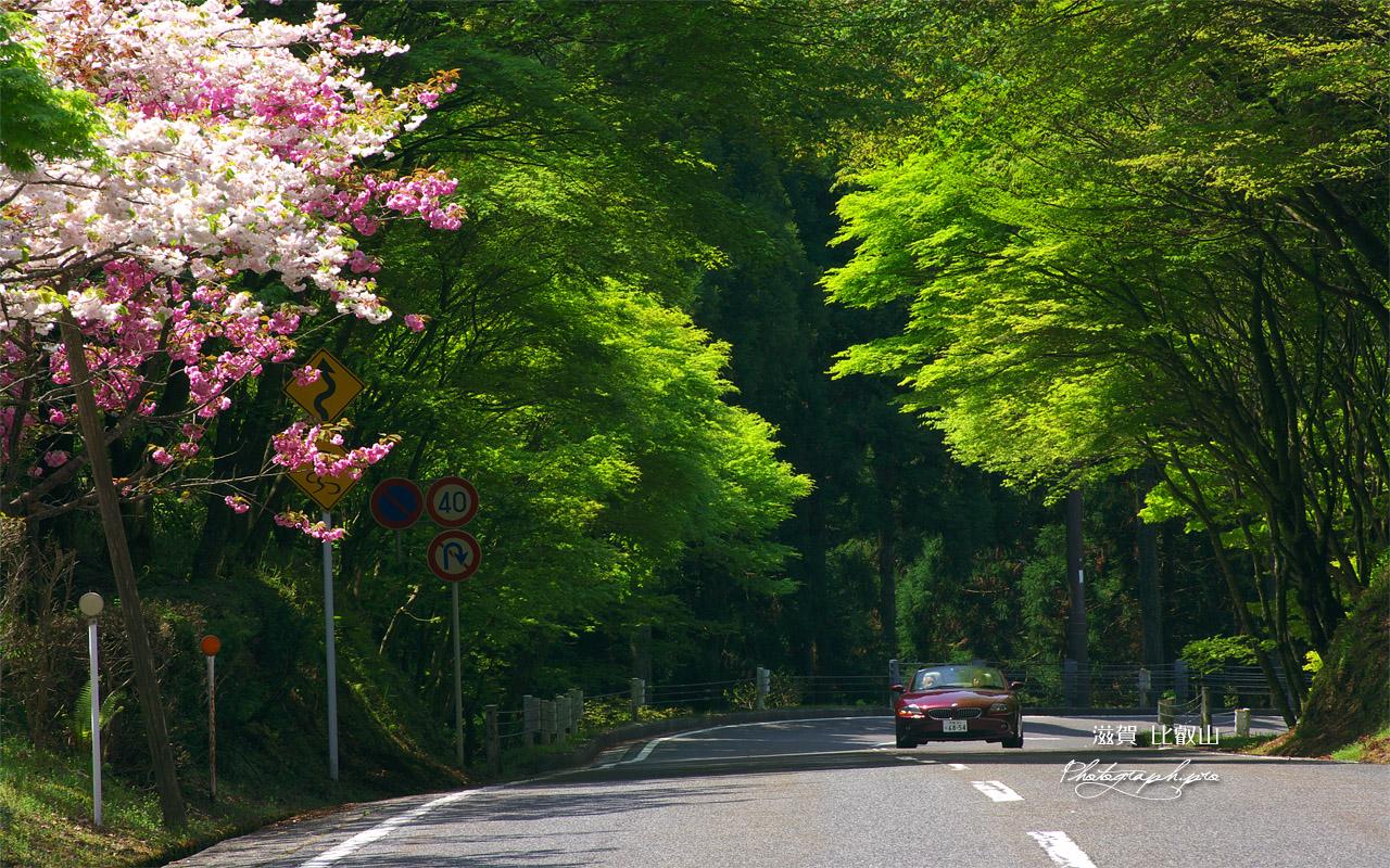 比叡山 八重桜とオープンカー 壁紙
