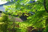 比叡山延暦寺 新緑越しの根本中堂
