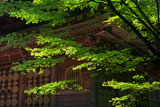 比叡山延暦寺 新緑の戒壇院堂
