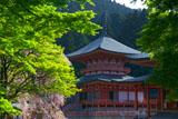 比叡山延暦寺 桜咲く法華総持院東塔