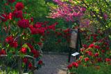 ガーデンミュージアム比叡 花咲く桃の木