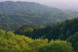 ガーデンミュージアム比叡から新緑の一乗寺