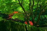東慶寺 新緑と春紅葉