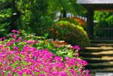 浄智寺のムシトリナデシコ