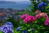 鎌倉長谷寺のアジサイと長谷の町