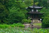勧修寺 氷室池のスイレンと観音堂