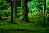 京都 法然院のアジサイ