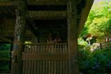 鎌倉 杉本寺仁王門とアジサイ