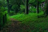 源氏山公園 遊歩道とアジサイ