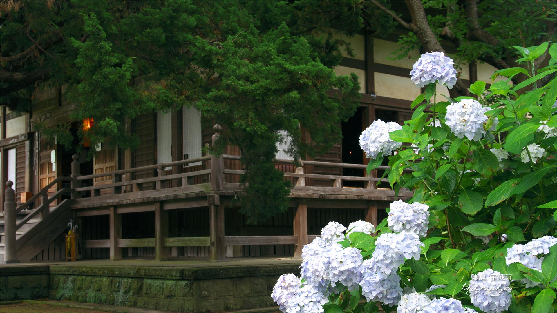 鎌倉宝戒寺 あじさいと本堂