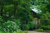 鎌倉宮 紫陽花と本殿