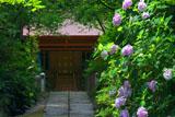 鎌倉葛原岡神社 アジサイと本殿