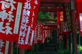佐助稲荷神社 鳥居の参道
