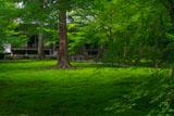 三千院有清園の青紅葉