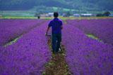 ラベンダーイーストの農作業