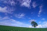 青空に筋雲の哲学の木