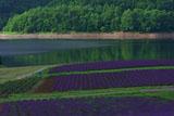 かなやま湖 朝の湖畔