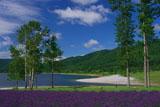 かなやま湖畔のラベンダー