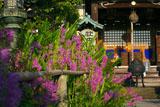 鎌倉常栄寺 ハナトラノオ