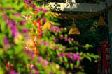 鎌倉八雲神社(大町) コムラサキ越しの注連縄