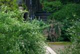 鎌倉宝戒寺の萩
