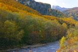 層雲峡小函の黄葉