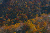 知床峠のダケカンバとナナカマドの紅葉