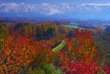 紅葉と十勝岳連峰