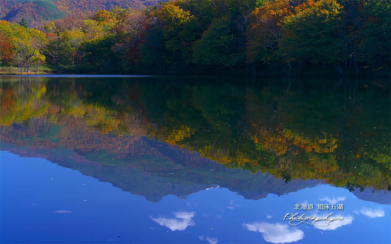 知床五湖の四湖 の壁紙 1280x800