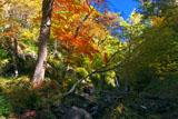 岩尾別温泉の紅葉