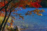 紅葉と流木