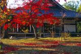 仁和寺金堂の紅葉