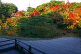 仁和寺北庭の紅葉