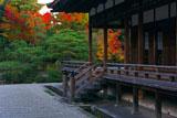 仁和寺宸殿と紅葉