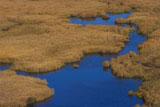 コッタロ湿原の草紅葉