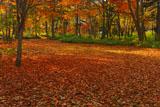 川湯の森の落葉