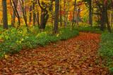 川湯の森の紅葉