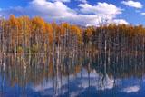 美瑛の青い池と十勝岳