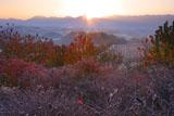 深山峠ハスカップ園の朝
