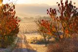 深山峠の果樹園の朝