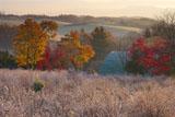 霜のハスカップ園と紅葉