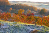 霜畳の丘に紅葉