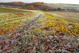 露霜の農道