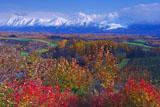 紅葉の丘と十勝岳連峰