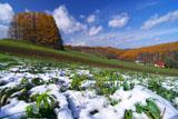 マイルドセブンの丘の雪とカラマツの黄葉