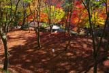 高雄の紅葉の絨毯