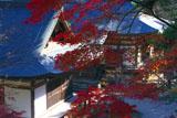 紅葉の五大堂と毘沙門堂