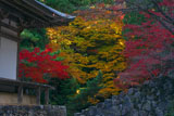 神護寺五大堂と三色紅葉